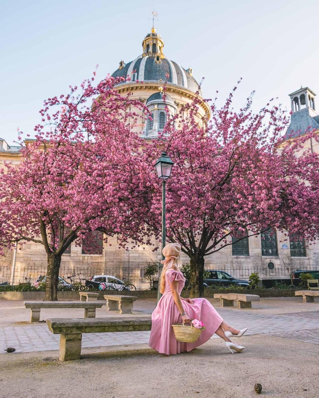 Cherry blossoms in Square Gabriel Pierné behind Institut de France - Paris