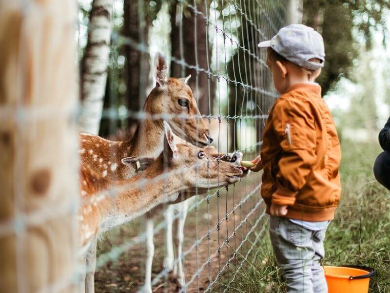 zoo 1 - Virtual Travel in 2021: The What, How, and Why of a New Experience