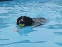 hondenzwemmen geusseltbad