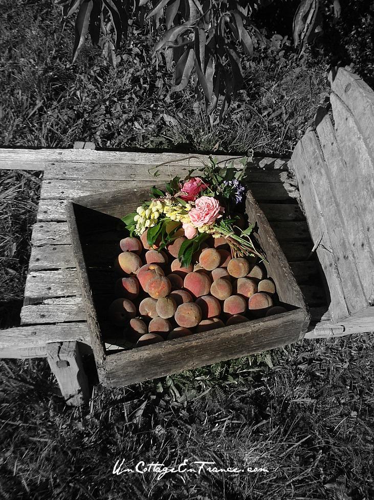 Un Cottage En France - Les peches de vigne en septembre