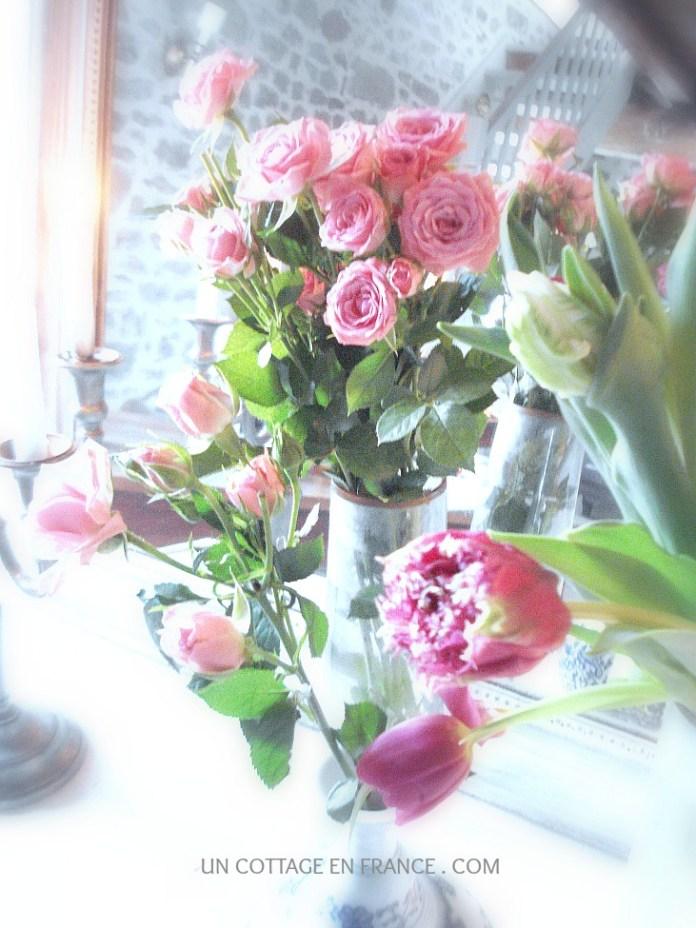 Les tulipes roses de janvier au cottage 1