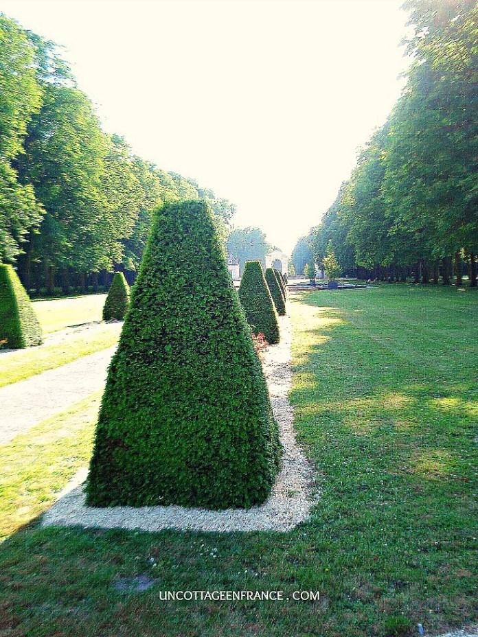 Les buis du parc Richelieu