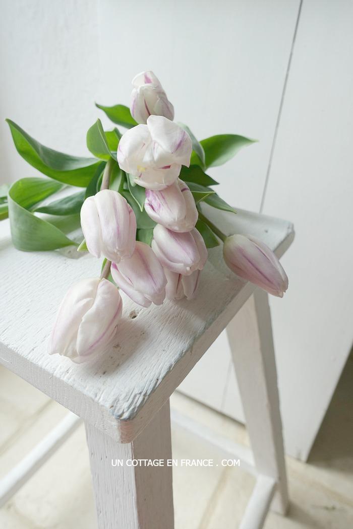 les tulipes rose pâle