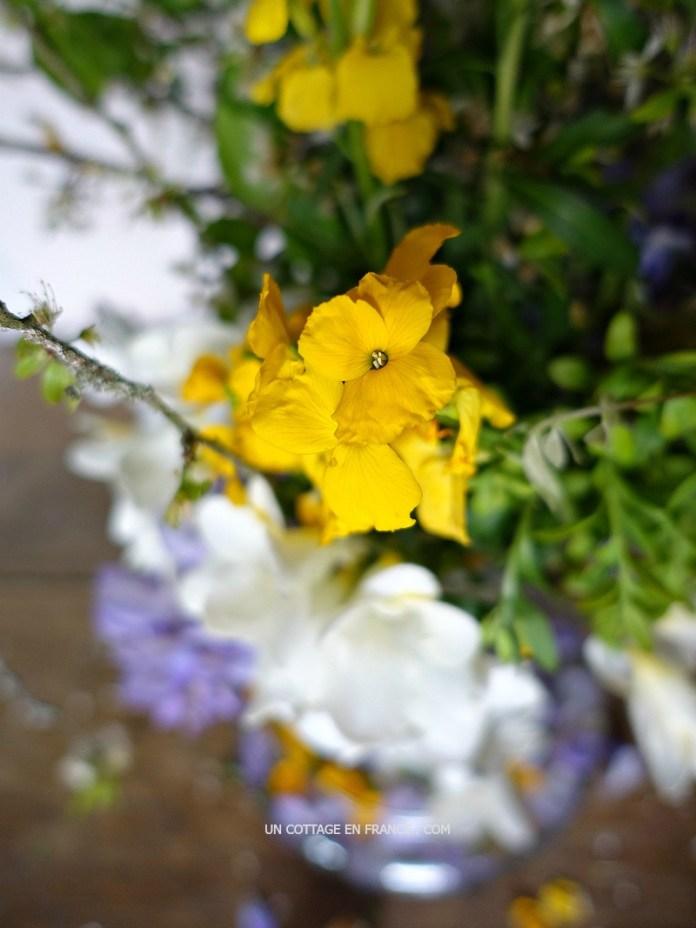 Bouquet d'avril, Glycine