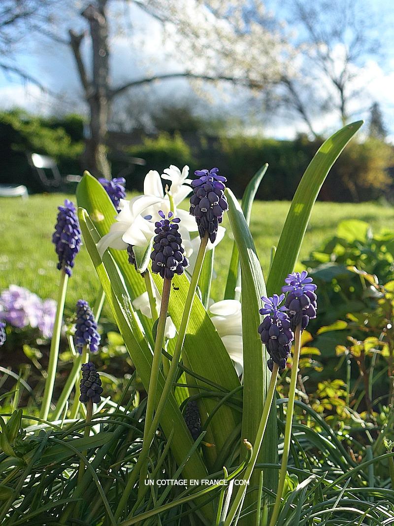 Superbes couleurs fraîches d'avril (Superb Fresh April colours)