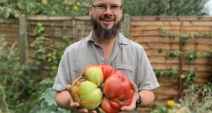 UK's biggest tomato weighs 3kg