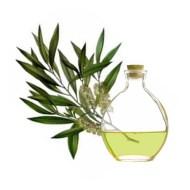 esencia-de-arbol-de-te-aromatica