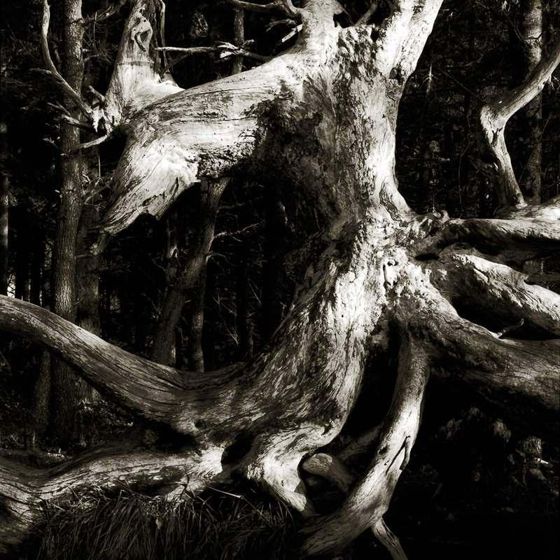Artist explores nature through a Taoist lens in new exhibit 2