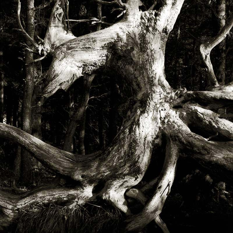 Artwork: Spiritchaser by M.C. Reardon