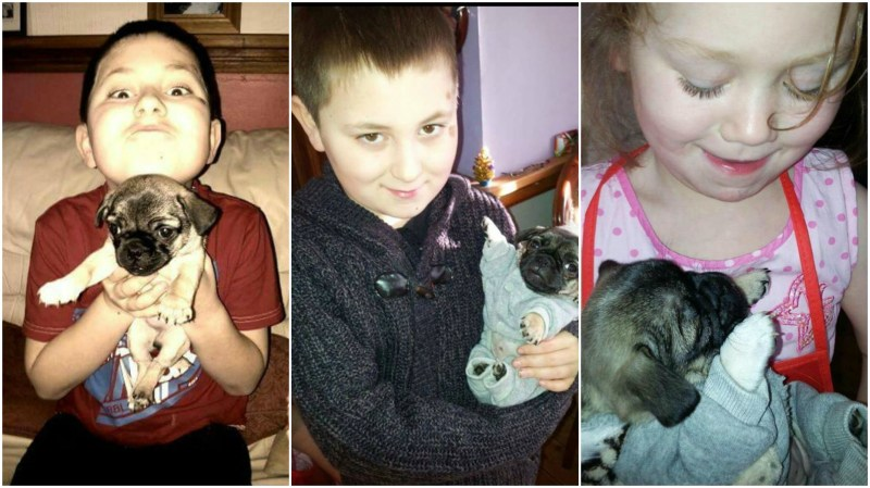 Vera has said that her children will be devastated if Puggy is not returned home