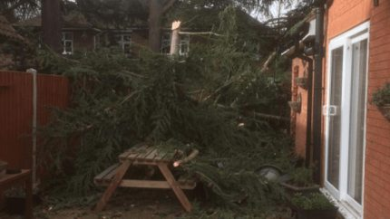 A tree crashing through a home in Spalding. Photo: Jackie Thyer