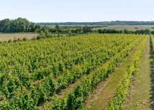 Award-winning Lincolnshire vineyard goes up for sale