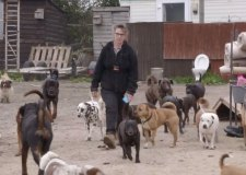 Woman with 400 animals banned from keeping pets for 10 years