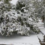 Earliest Snowfalls Lincoln Nebraska Lincoln Weather And Climate Nebraska