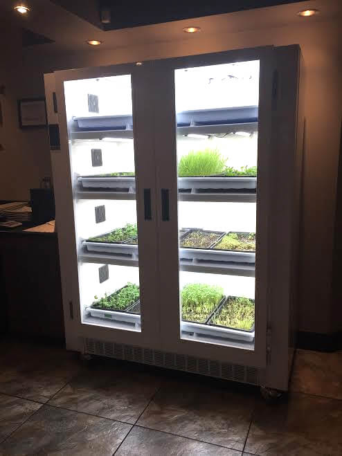 Sushi Sugoi uses an Urban Cultivator to grow its own fresh, organic microgreens!