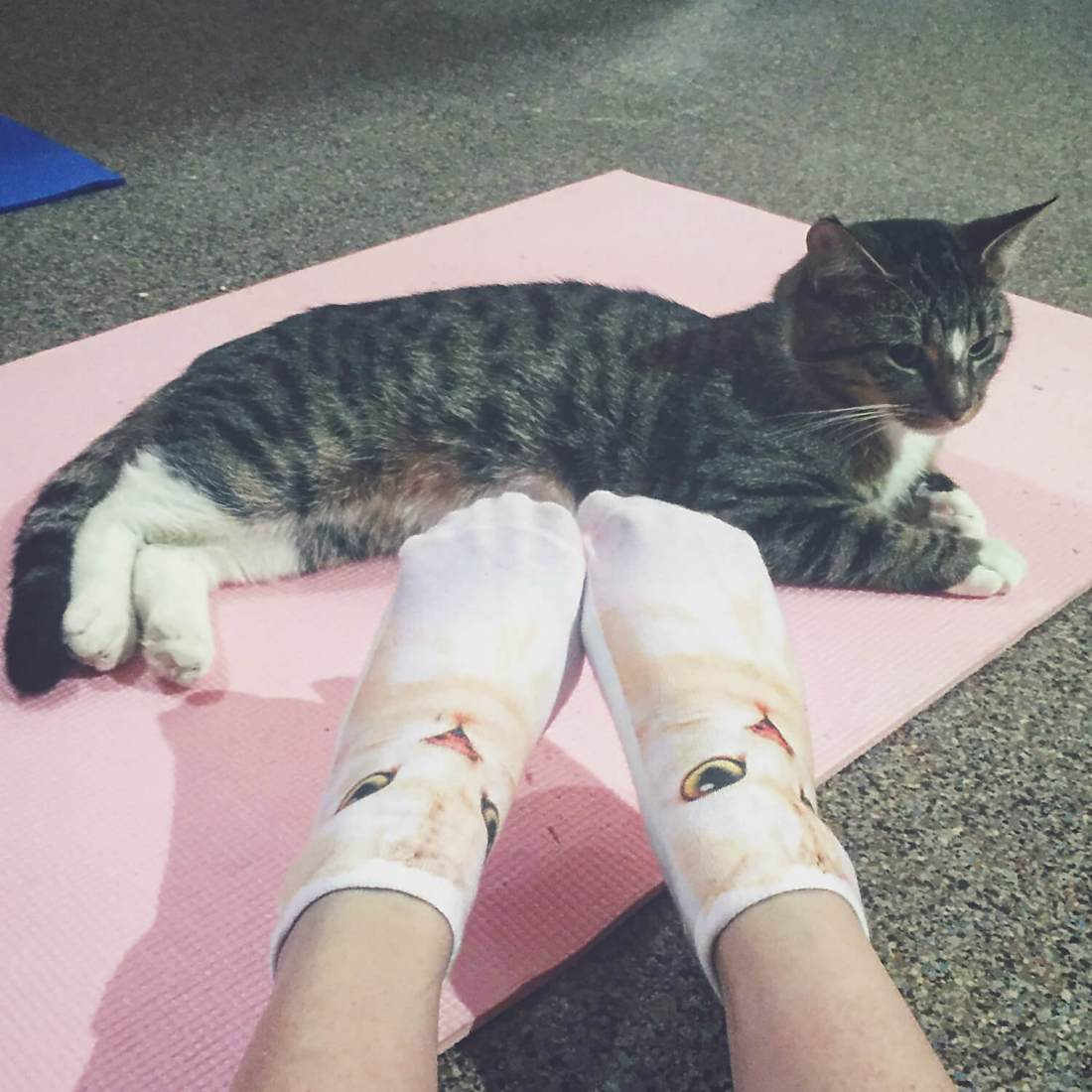 Cats on Your Mats - Cat Yoga - Edmonton Humane Society