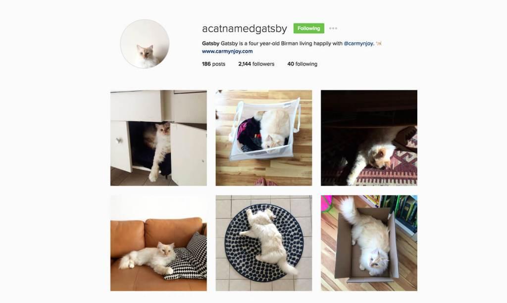 Edmonton Instagram Users Social Media