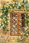 """Travels Collection : Peek at Volpaia, Painting of an Italian window surrounded by a vine with white flowers in bloom by Linda Abblett. Original 22"""" x 15"""" 800"""