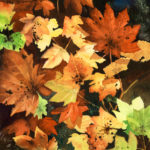 "Florals : Splendor in Fall, Watercolor painting of autumn leaves in full fall color by Linda Abblett. Original 15"" x 22"" $900; giclee same size as original $130"