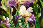 "Linda Abblett : Florals : Summer's Bloom, Watercolor painting of purple and white iris flowers in bloom by Linda Abblett. Original 22"" x 15"" $900; giclee 22"" x 14.5"" $130"