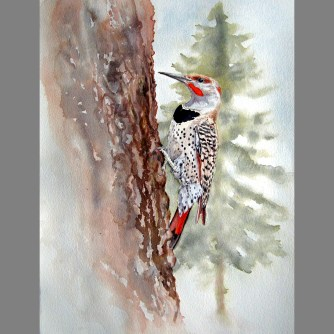 'Northern Flicker' watercolor/paper