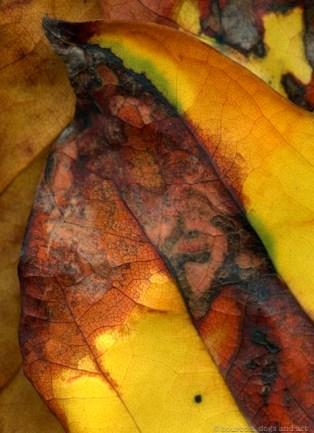 """Leaves After Marc,"" woodland banner by Steven Durland"