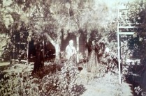 Prior to 1888. I think this is one of Elizabeth's daughters under tree( Possibly Theresa) , Theresa Holmes ( WBC's mother) and the sharp face of Mary Browne Matthews, Elizabeth's mother. Taken either in Castlemaine or Cairnesville, Yarrawonga.