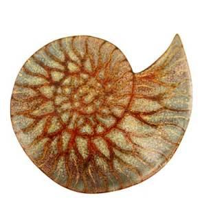 Ammonite-Fossil-Brooch