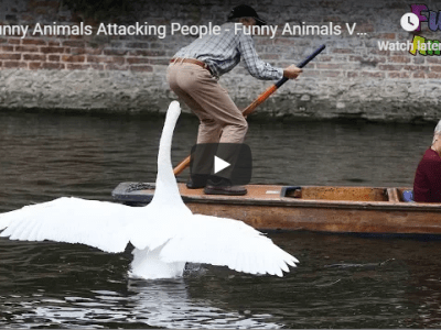 Funny Animals Attacking People - Funny Animals