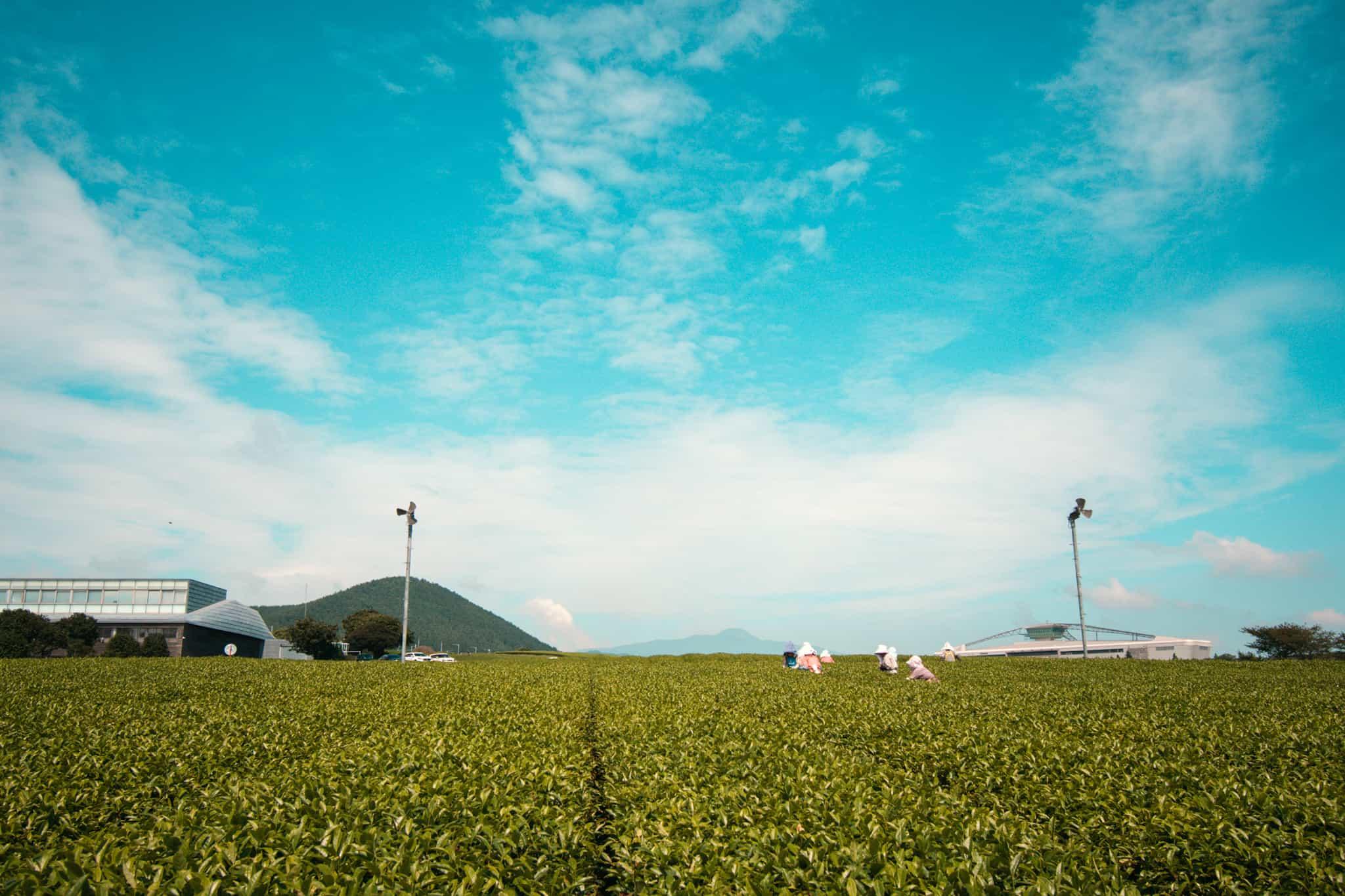 Osulloc Tea Museum in Jeju