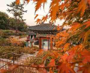 fall foliage in korea guide