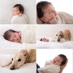 Newborn and Pets Photography