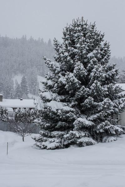 snow day-1-3