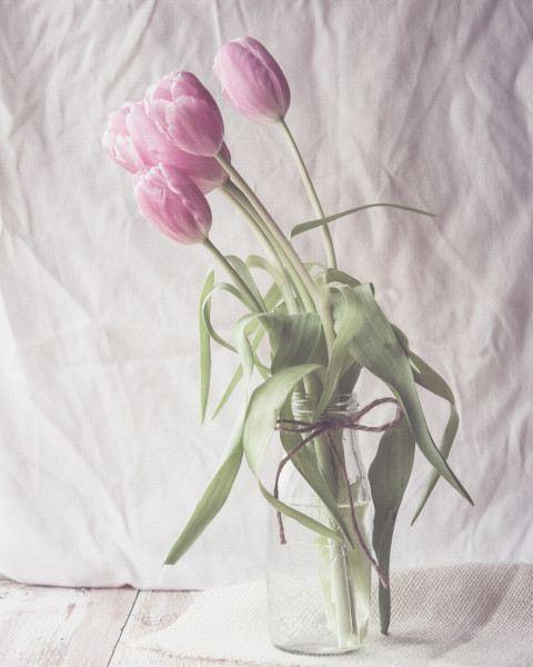 2015-02-12 - Tulips-1-2