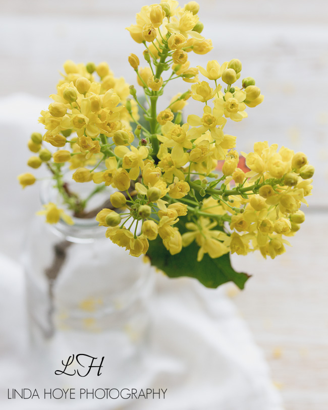 2016-05-03 Flowers-1-8-2