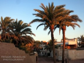 Date palms still tower over homes although less than before.