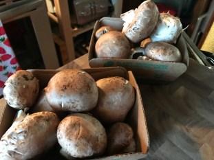 Cremini And White Button Mushrooms