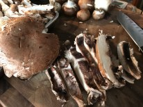 Portobello Mushroms