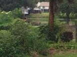 Tom West Blueberry Farm (7)