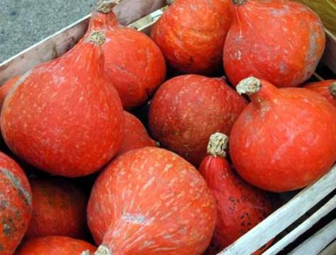 pumpkinfete-13.JPG