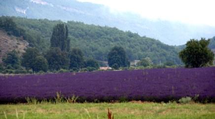 lavender-31.JPG