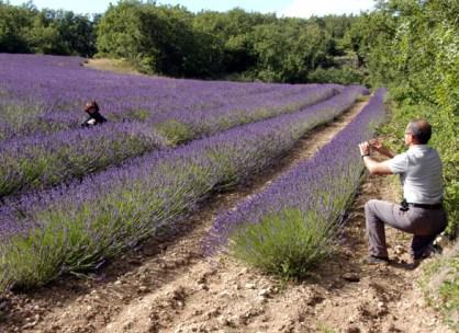 lavender2-79.JPG