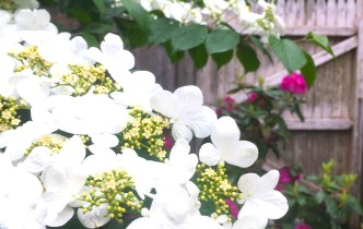 Color Inspirations: Dogwood and Rhodies