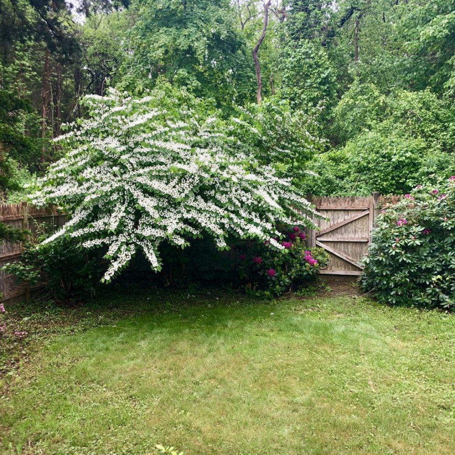 Linda Merrill back yard fence door rhododenrans secret gardens