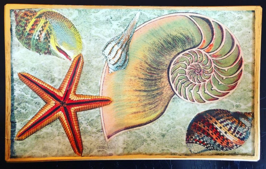 Linda Merrill Decoupage tray shells