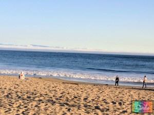 Santa Cruz海灘紅木