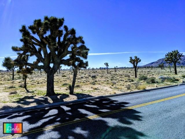 加州Joshua Tree National Park