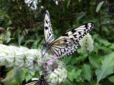 Vlinder op struik