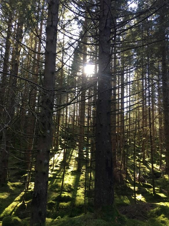 Fin natur på vei gjennom Lien på Ask Lindaslilleverden