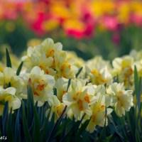 The return of spring